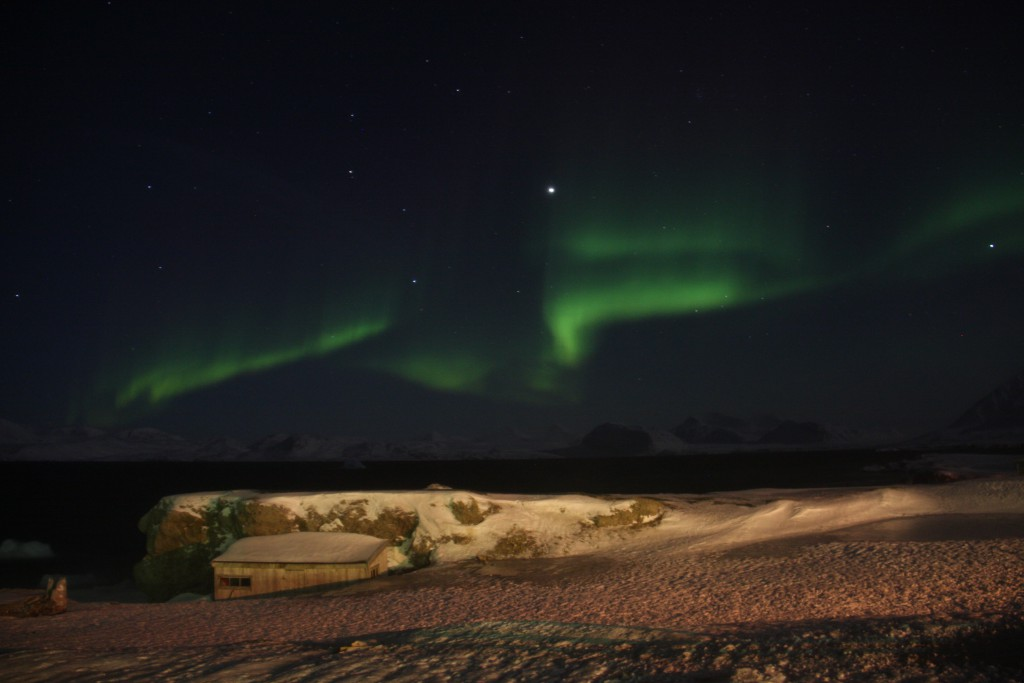 Northern Lights dancing over Kongsfjorden. Photo: Malin Daase